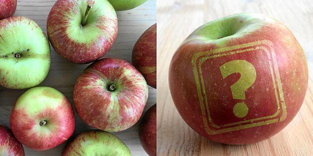 Känner du igen de svenska äpplena? 5 vanliga sorter!