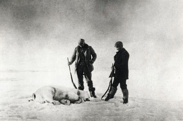 Till vänster om isbjörnen syns polarfararen Knut Frænkel, till höger står Nils Strindberg och betraktar bytet.