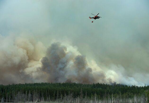 Helikopter vattenbombar utanför Gammelby i augusti 2014, där boende tvingas att lämna sina hem efter att räddningsledningen beslutat att hela byn skall evakueras.