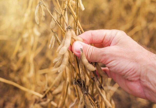 Den befarade bristen på ekologisk soja uteblev.