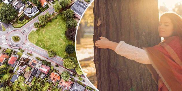 Så viktiga är träden i städerna – här är 4 exempel!