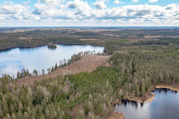 Gysinge skog säljer totalt 520 hektar skog i Halland.