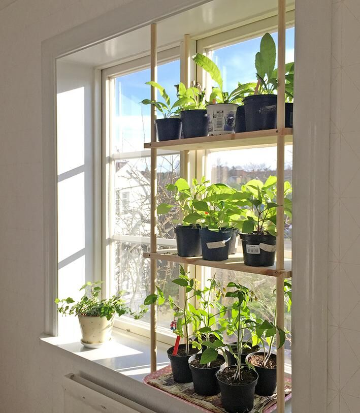 Så bygger du en odlingshylla.