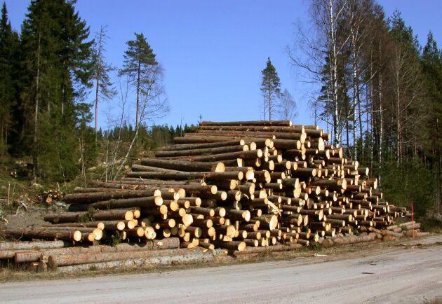 Överutbud efter stormen Alfrida och härjningar av granbarkborre gör att även Mellanskog sänker priserna på timmer.