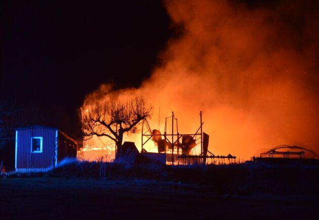 Marcus Cederborg och hans pappa Thomas Palmqvist förlorade nästan hela besättningen över en natt – bara 7 kor överlevde branden.