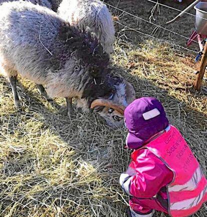 Djur på schemat. Två små barn på Suderängens förskola på Gotland får umgås med och sköta bondgårdsdjur om dagarna.