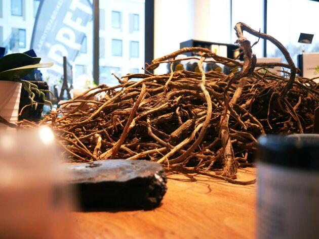 Lakritsroten skördas på våren genom att man drar upp rötterna och låter dem torka.