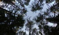 Debatt: Vem ska äga skogsdata?