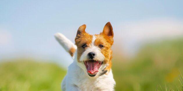Hundcoachen tipsar: Det behöver din hund för att må bra