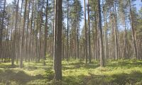 Expertrapport sågas av skogsbranschen