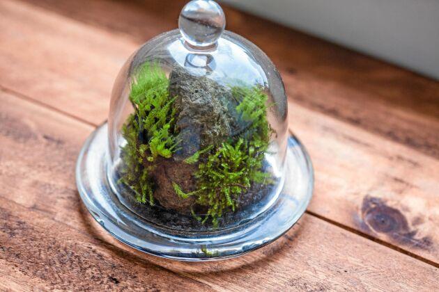 Ett vackert stenfynd med några små mosstofsar på. Foto: Istock