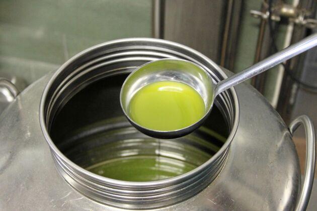 Ännu inte märkt olivolja från Ligurien i Italien.