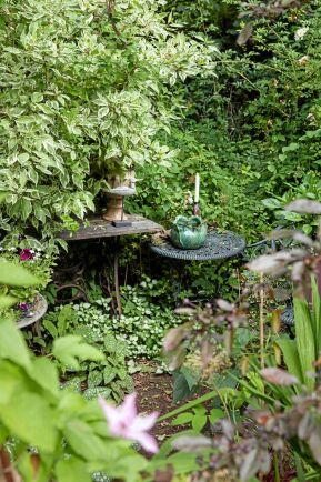 Thomas hållbara stengodskeramik tål att stå ute i trädgården. Här med lungört, rosenplister och andra växter med flerfärgade blad som glimmar i skuggan.