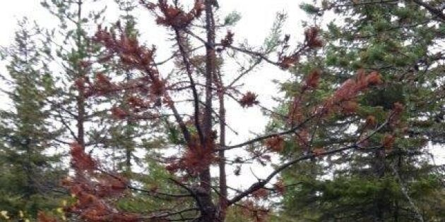 Här skadades skogen mest 2017