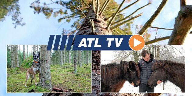 ATL TV: Hunden hittar barkborrarna