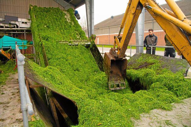 Testanläggningen i Foulum har varit i gång sedan våren 2018 och processar 1 000 ton gräs i timman.