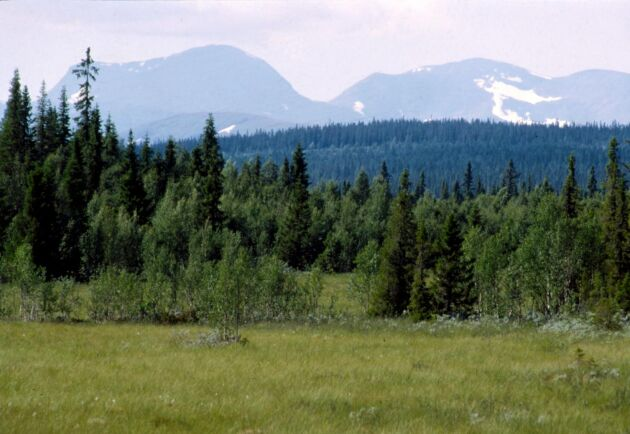 Hur myndigheterna ska beräkna ersättning för skogsägare som får avslag på att avverka fjällnära skog har blivit en infekterad fråga.