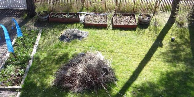 Från rishög till odlingssuccé! Kolla in familjens fantastiska förvandling i trädgården