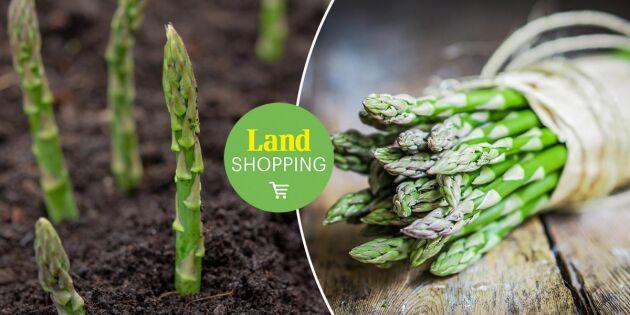 Njuta av sparris – två lättodlade sorter