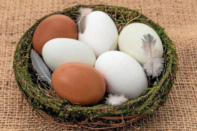 Ägg i fina färger. Här är det vita ägg, bruna ägg från maran och turkosa aracuanaägg.
