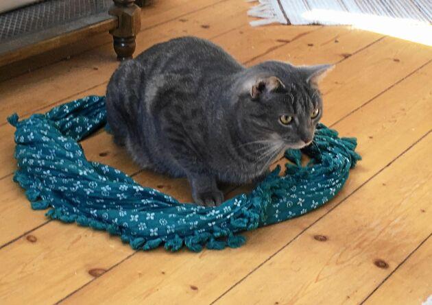Folk säger att katter inte kan låta bli att sätta sig i ringar. Jag testade med en sjal och det stämmer.