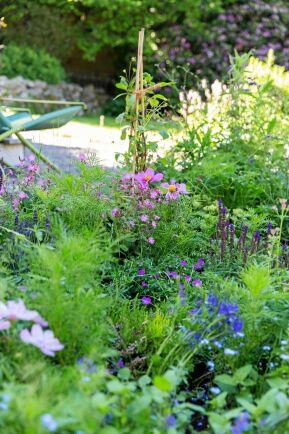 Leonor ägnar sig gärna åt resten av trädgården också. I perennarabatten trängs blommorna med myntor av olika slag. Jordgubbsmynta och melonmynta hör till favoriterna.