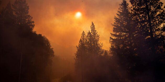 Därför brinner det i Kalifornien