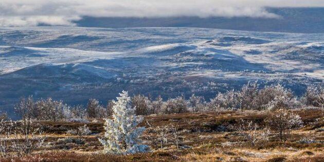 Så vackert! 6 ögonblicksbilder av hösten – runt om i Sverige