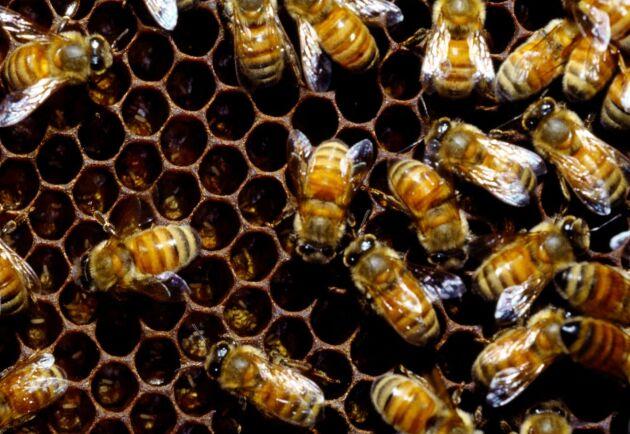 Många honungsburkar som säljs inom EU, innehåller något annat än äkta vara. Nu tar man strid mot förfalskarligor.