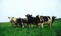 Flera bud på konkursad mjölkgård
