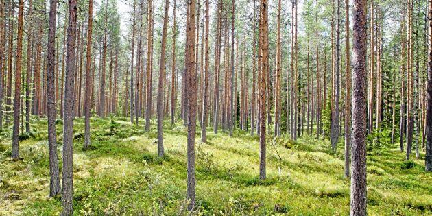Skogsstyrelsen vill stoppa gran på tallmark