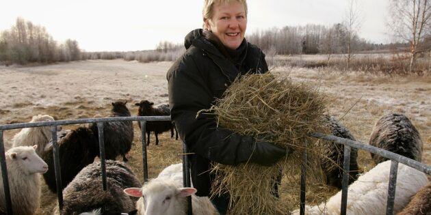 Antalet lantbruksföretag minskar i inlandet