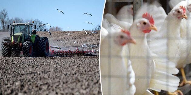 Fågelinfluensa ställer till det även för vårbruket