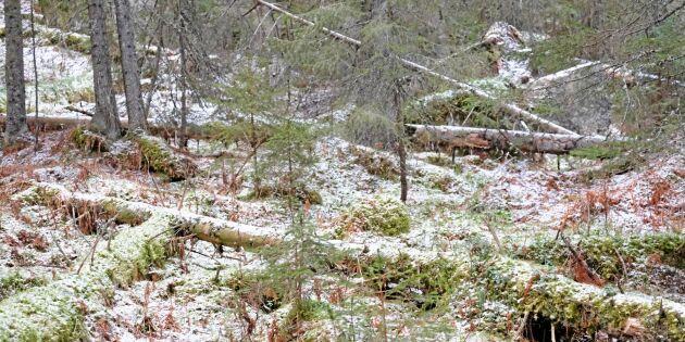 Osäkert om mer budgetpengar till skogsskydd