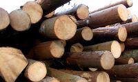 Mellanskog sänker timmerpriset