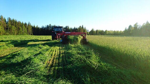Elaine Björnfot har en gård med ett 100-tal renar samt vallodling i Narken i Pajala.
