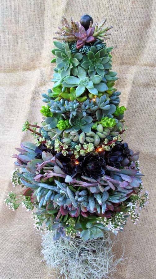 succulentgran