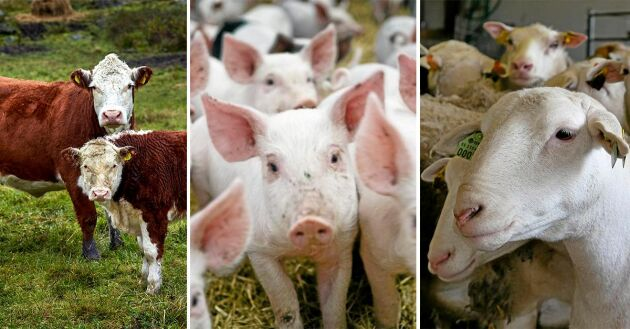 Debattörerna vill att LRF står upp för köttproduktionen.