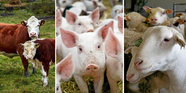 Måttet är rågat – försvara köttproduktionen, LRF!