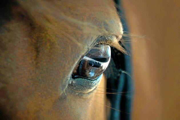 Ridsportens toppar vill ha licens för att ha häst.
