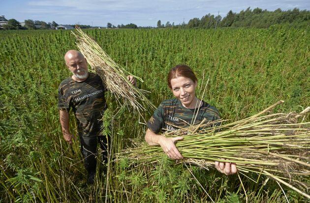 Robert och Jeanette skördar hampa på sin åker på Skärholma gård i Skåne.