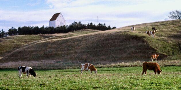Oförändrad skuldsättning för danskt lantbruk