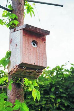 Fågelholk omgjord till humlorna med säker, minimal ingång.