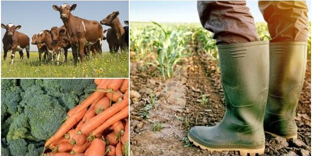 Sträck på dig och känn stolthet - för du är bonde!