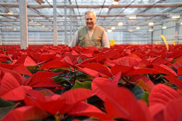 Peter Höglund är tredje generationens julblommeodlare på Höglunds Blommor AB.
