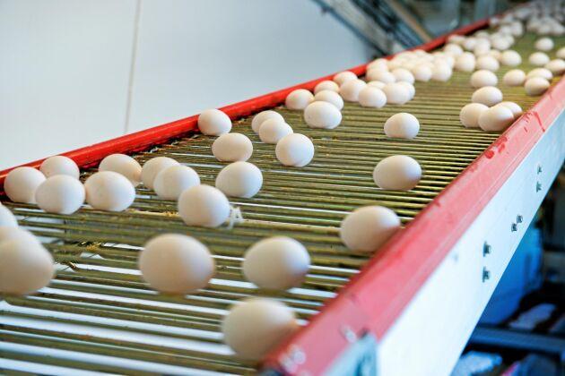 –Svensk äggproduktion ligger väldigt illa till. Under mina 20 år i branschen har jag aldrig varit med om något liknande, säger Peter Åberg.