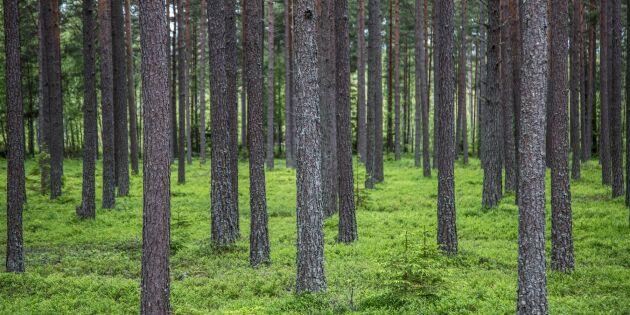 Mer gran i skogen ger mindre mat på marken