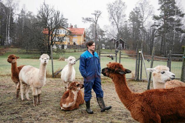 Andreas med några av parets 12 alpackor.