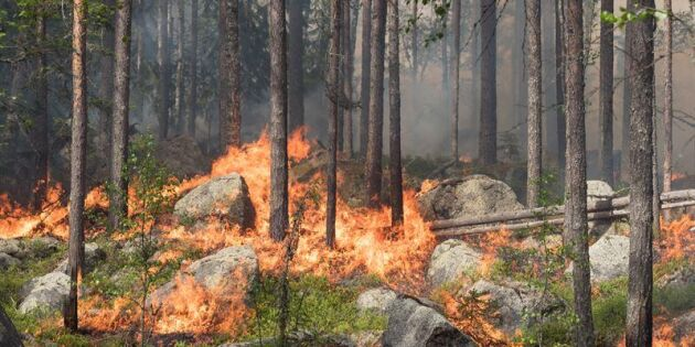 De bränner skogen med flit