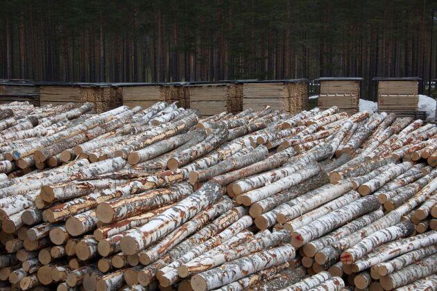 Efterfrågan på och intresset för att odla lövträd ökar, menar virkesköpare på Sveaskog.